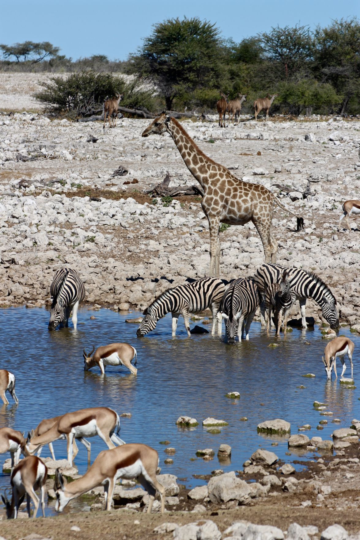 WILDLIFE Midday at the watering hole