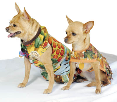 BIZ BUZZ Fido Fashions