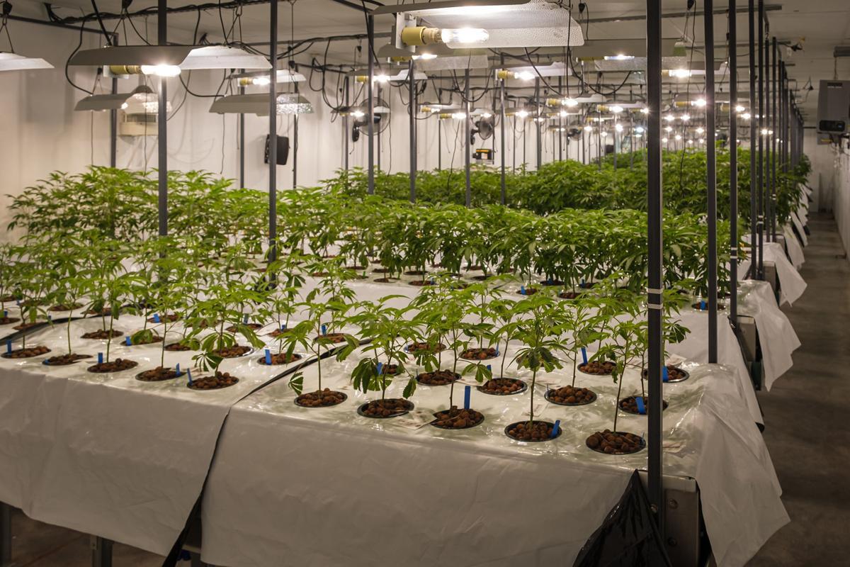 112019-nws-pot-grower-1.jpg