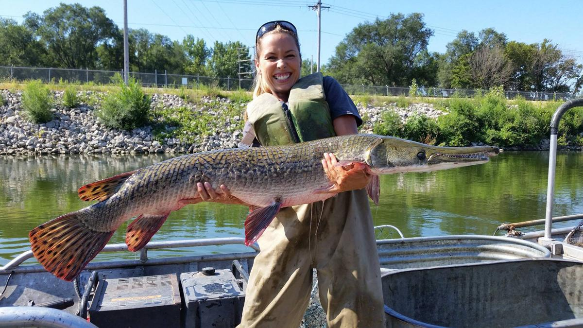 Alligator gar being re introduced in illinois waters for Fishing lakes in illinois