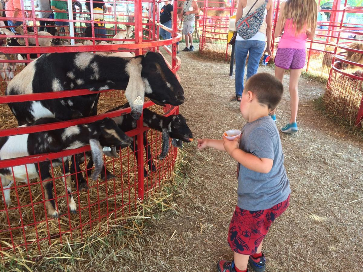 Petting Zoo at the 2017 Du Quoin State Fair