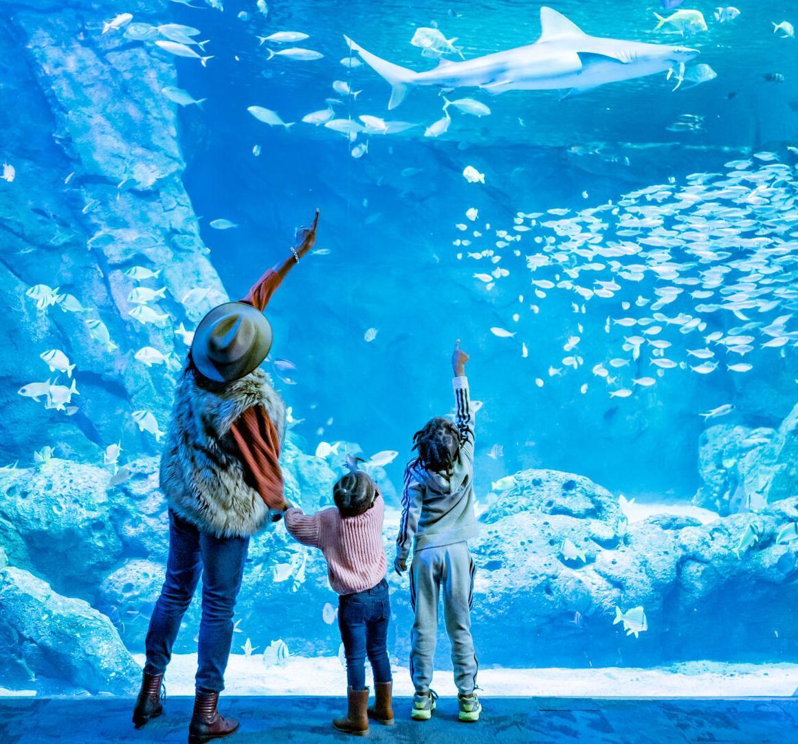 Aquarium - family facing tank.jpg