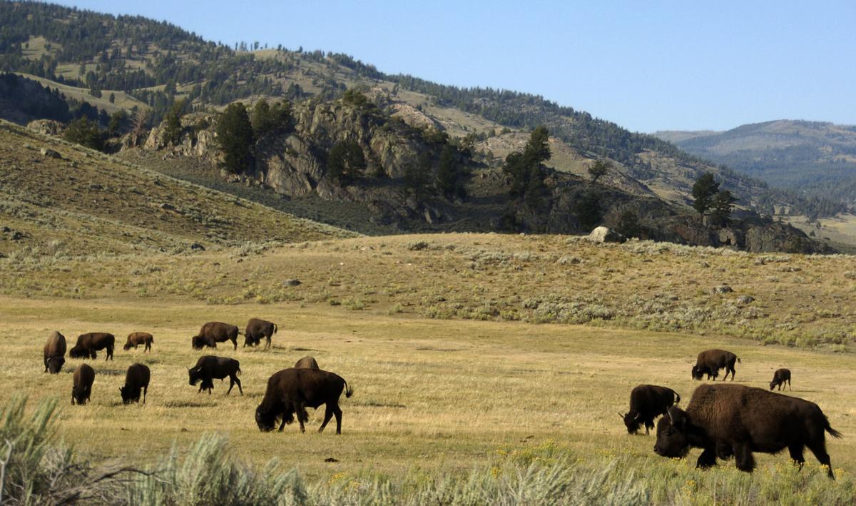 Yellowstone Missing Hiker