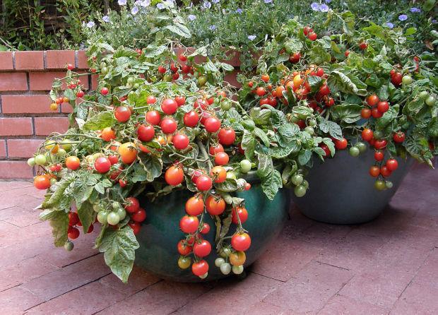 Vege Garden Planter Boxes