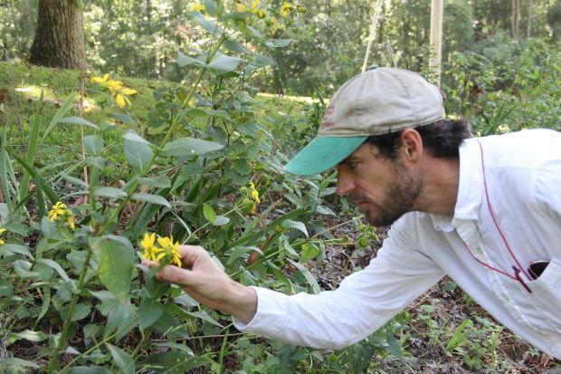Wildlflowers in bloom despite stifling heat