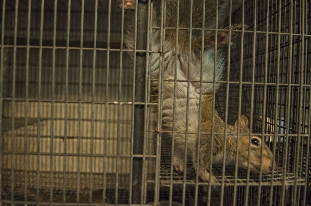 042114-nws-baby-squirrels-004.jpg