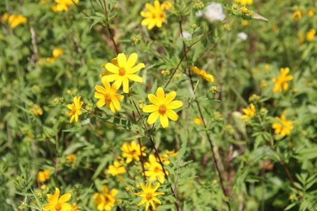 Wildflowers in bloom despite stifling heat