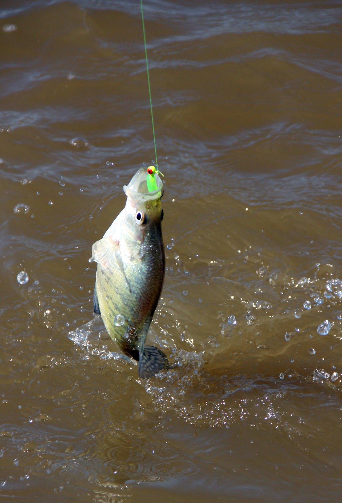 042119-otd-rendlake-fishing-3