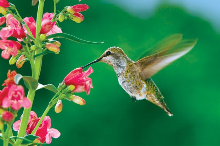Spring Means Yard Work For Hummingbird Watchers Lifestyles