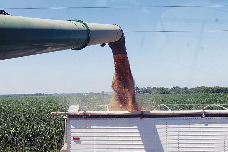 Wheat is unloaded