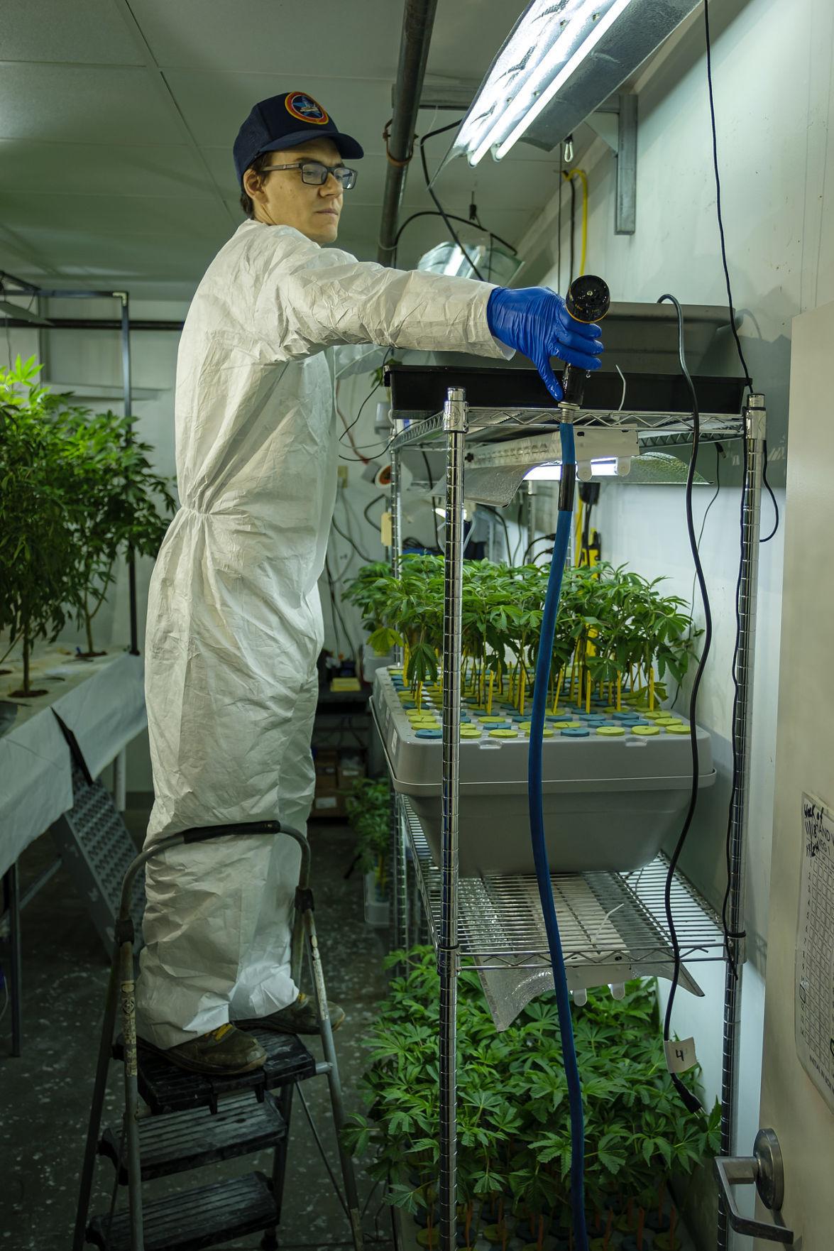 112019-nws-pot-grower-2.jpg