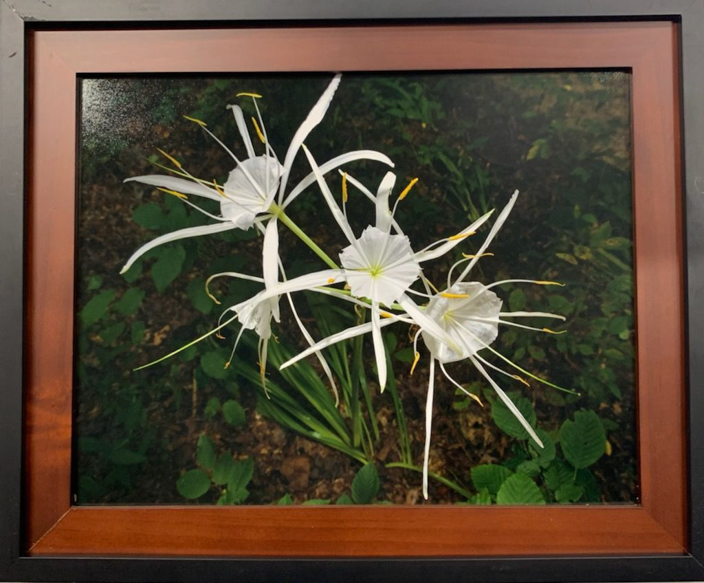 Three Spider Lilly - Battlford Creek by Jeff Jones