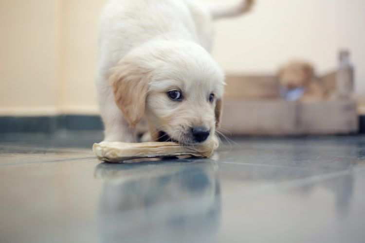 FDA issues warning about bone treats for dogs