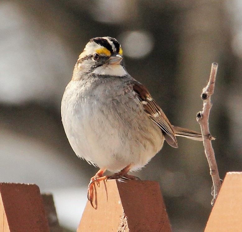 112317-spt-otd-sparrows-1.jpg