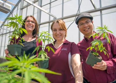 SIUC Hemp Plants