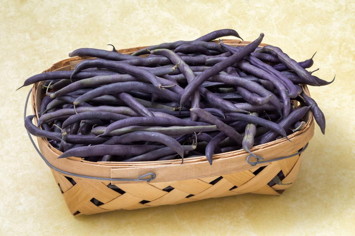 Purple Hull Peas in Basket
