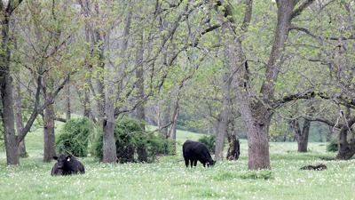 Forested land can hold value for Illinois farmers