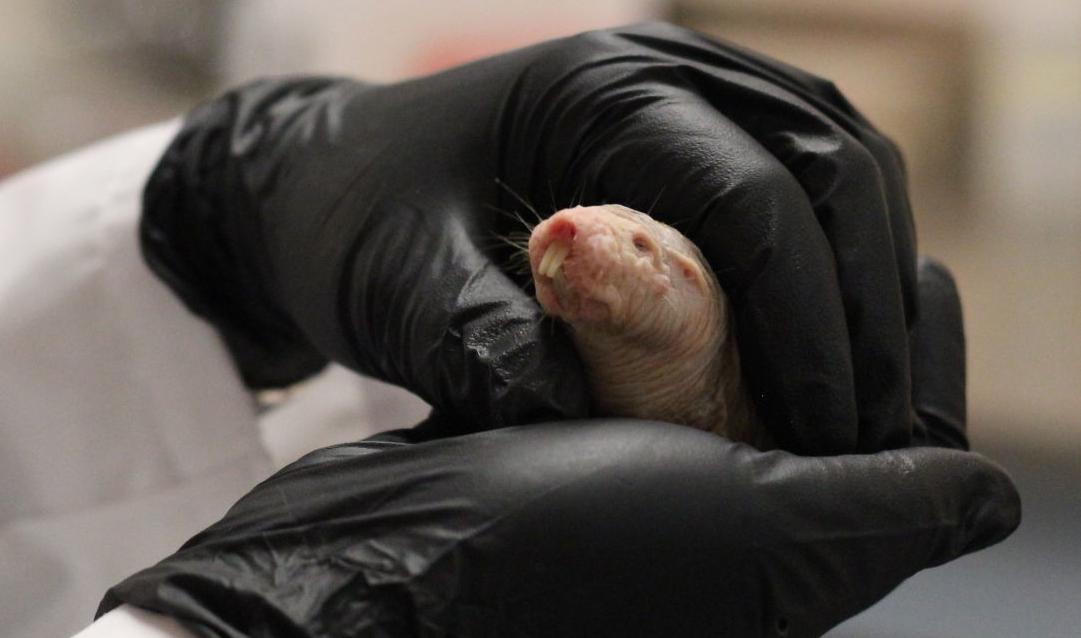 060218-nws-mole-rats-2