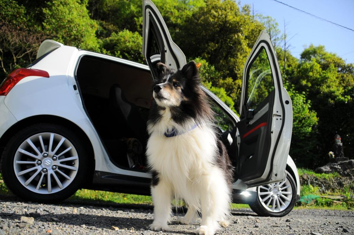 Dog by car