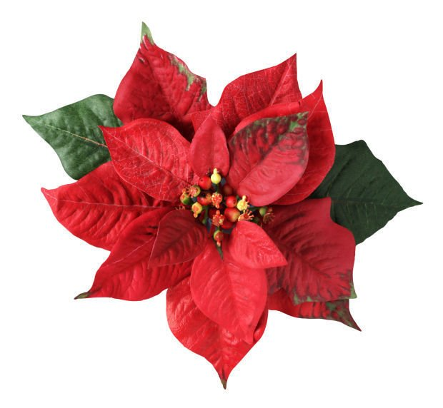 ten things to know about a christmas flower favorite  home and, Natural flower