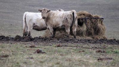 Muddy Pasture