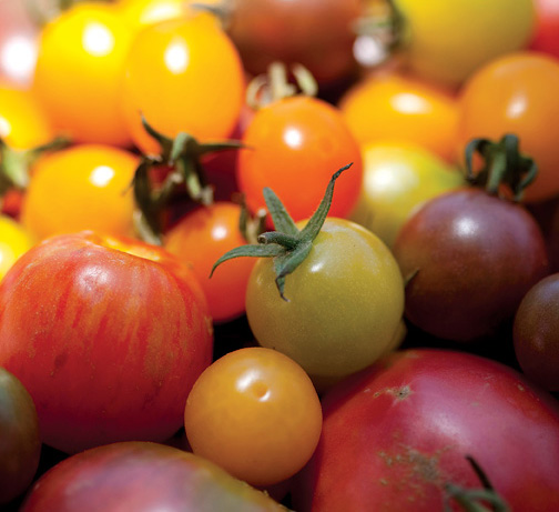 0925 TASTE cherry tomatoes
