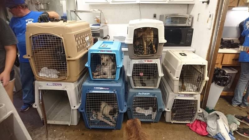 Several shelters offer help after 91 dogs rescued from