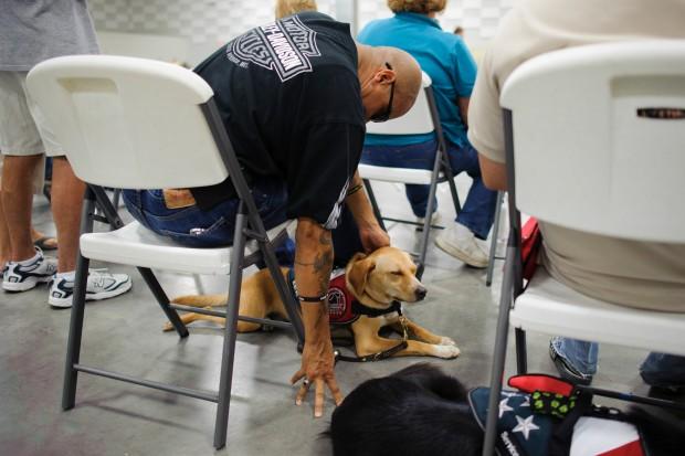 SERVICE DOGS JJH 08182012