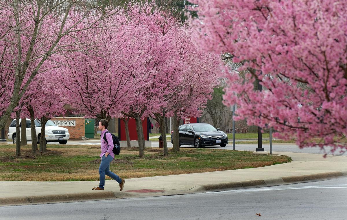 022817-nws-early-spring-cherry-2.jpg