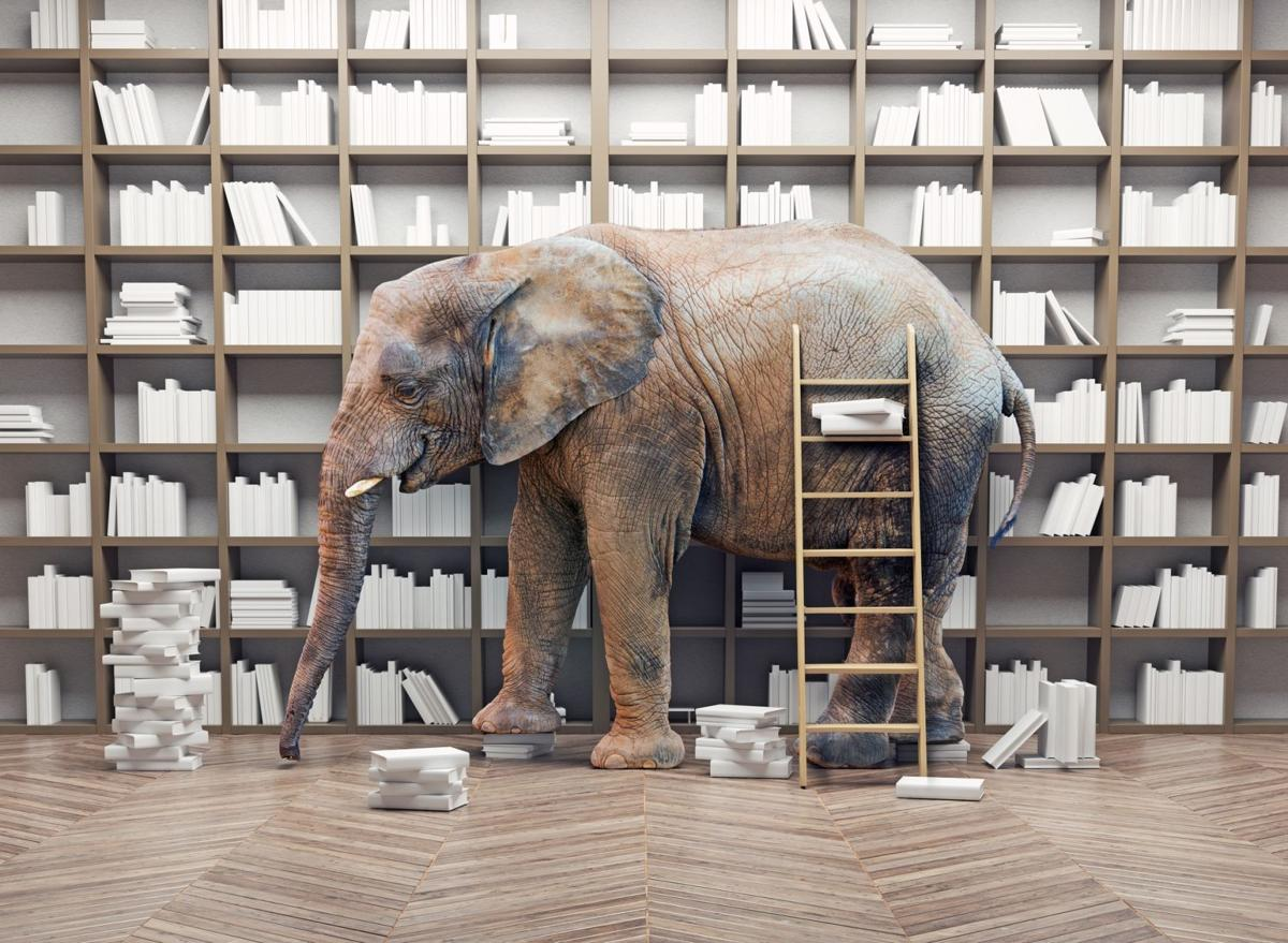 File image -- Elephant with books