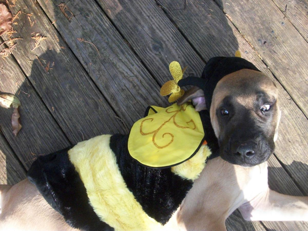 Halloween Hounds: Readers Share Their Pets In Costume