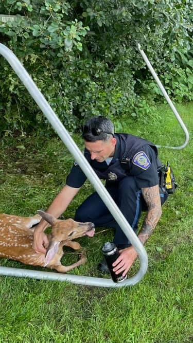 Foxboro cop saves deer