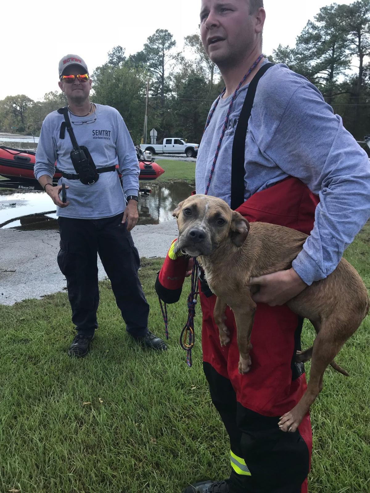 Dog Rescuing In Plymouth