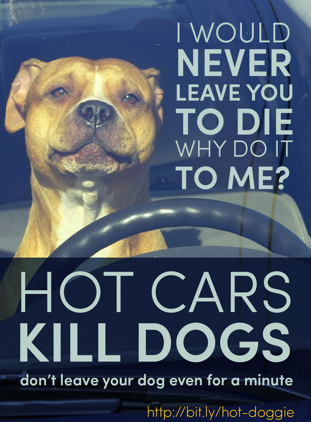 Hot Cars Kill Dogs Poster
