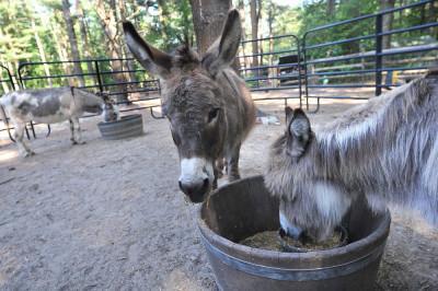 Winslow Farm Donkeys