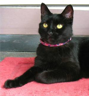 KITTY CORNER: Why do black cats get a bad rap?