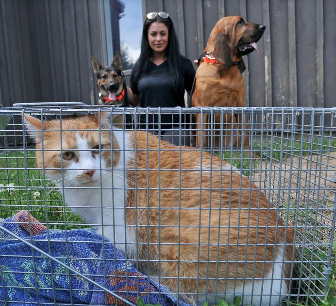 Homeward Bound: North Attleboro woman brings missing cats back home - The Sun Chronicle