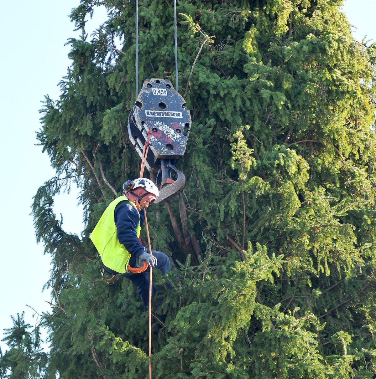 Foxboro Xmas Tree