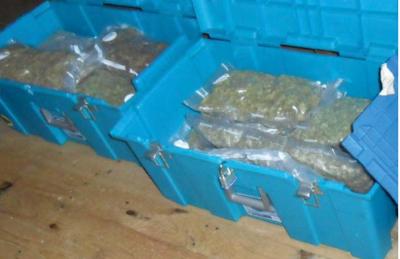 marijuana seized by feds