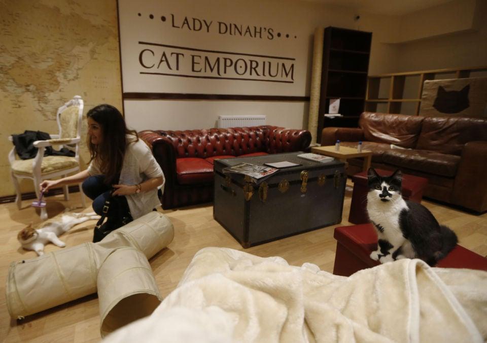 Cat Cafe East London