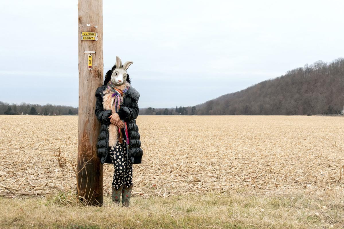 aam Breitfeller_Rabbit_in Cornfield 3
