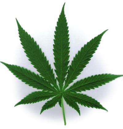 Marijuana graphic