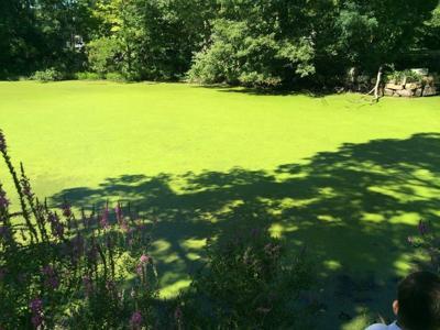 Crackrock Pond Foxborough