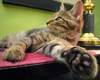 GATES: 'Paw' reading for cats? Believe it!