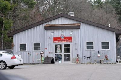 north attleboro animal shelter