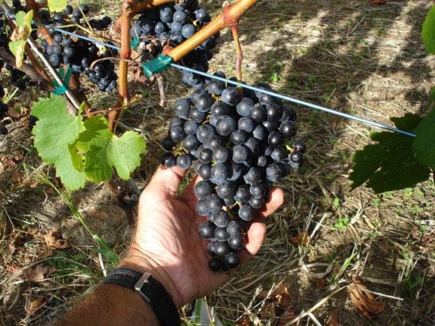 cwt coastal-vineyards