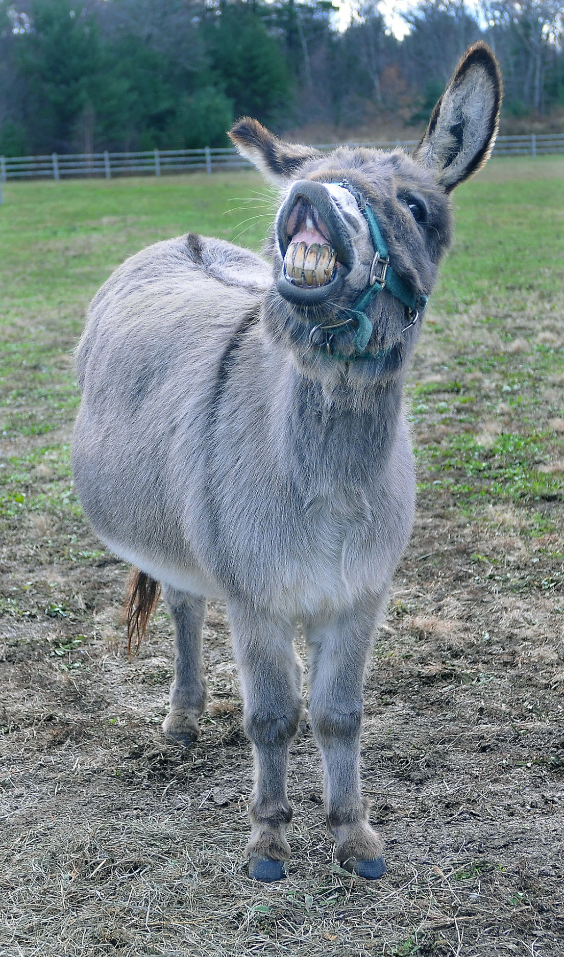 clopper the donkey will return to lasalette local news