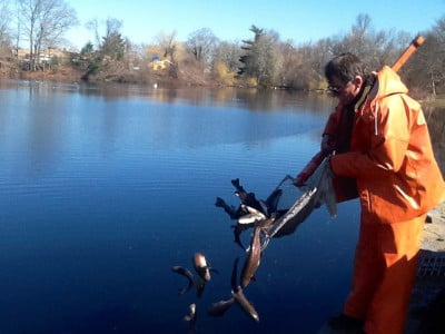 Stocked with trout in seekonk local news for Mass fish stocking