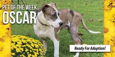 Pet of the Week - Oscar