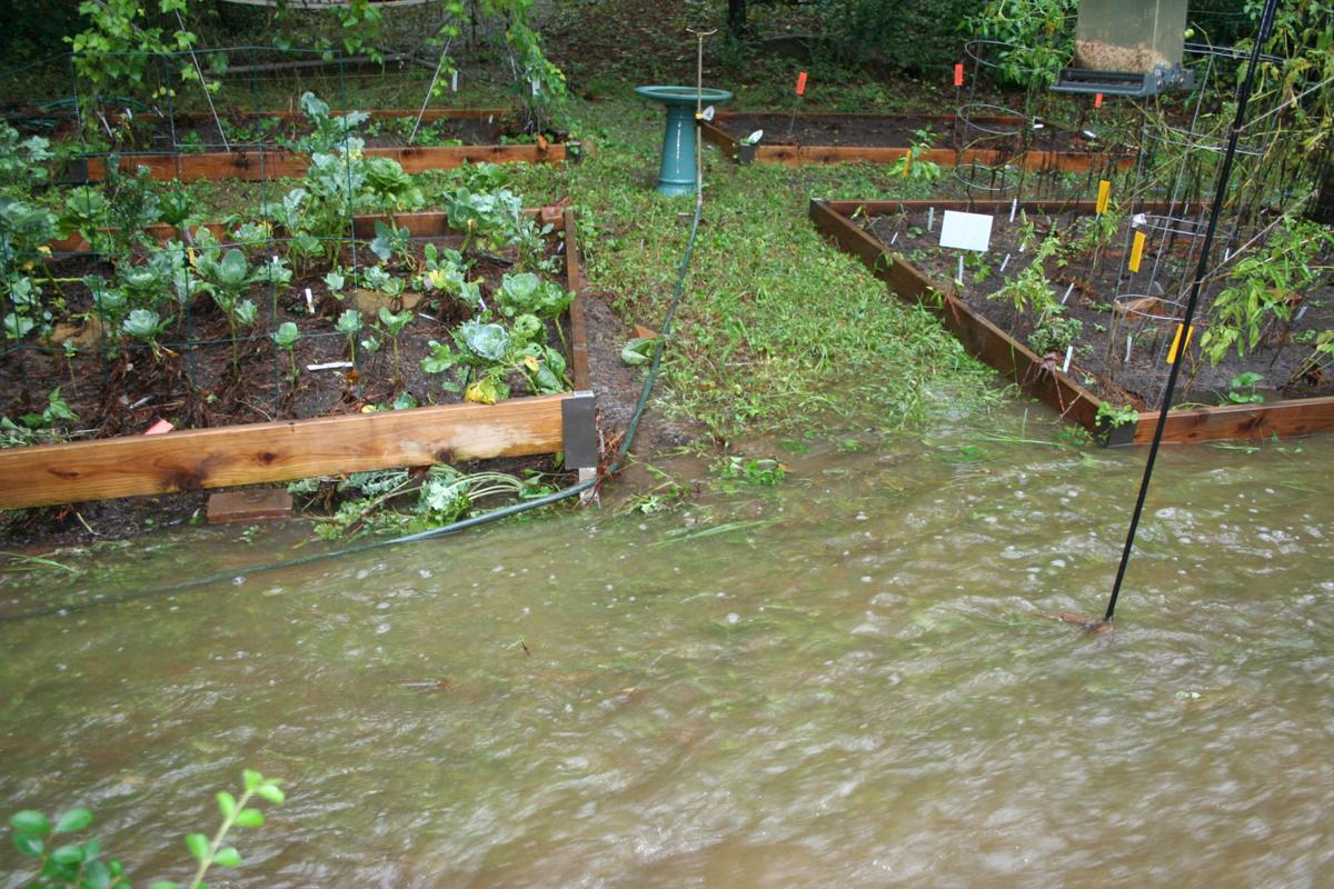 The aftermath of a storm: Flooding can leave work to do with plants